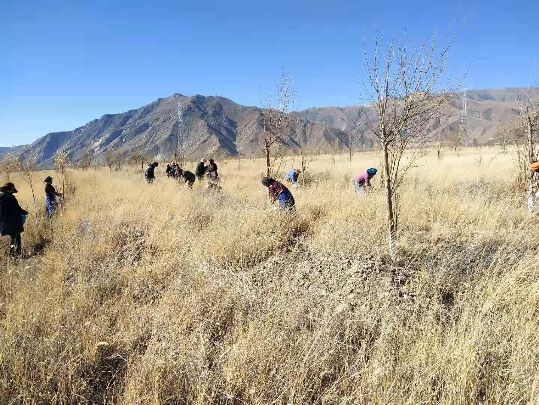 曲水县开展后期重点区域生态公益林建设项目管护工作